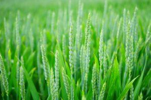 Wszelkie rośliny sprawdzają się jako składniki kremów na trądzik.